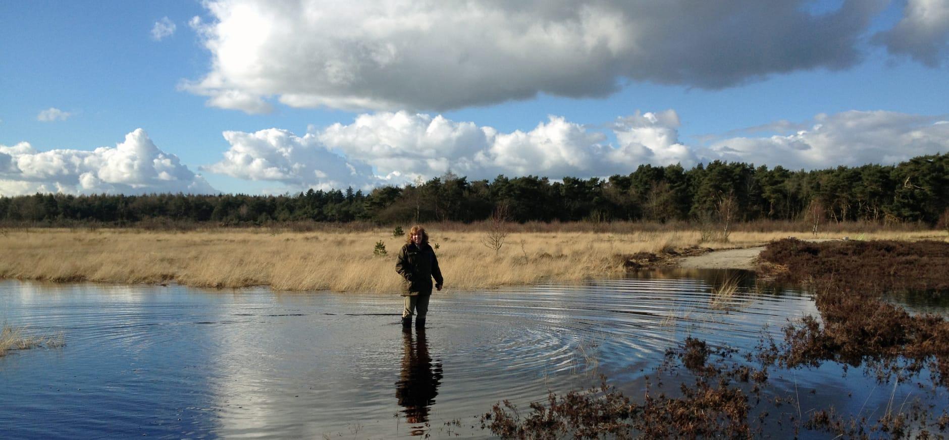 Natuurproject Anserveld vertraagd door aanhoudende natheid