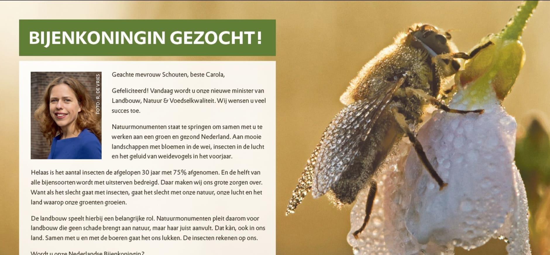 Bijenkoningin Gezocht: actie Natuurmonumenten voor insecten