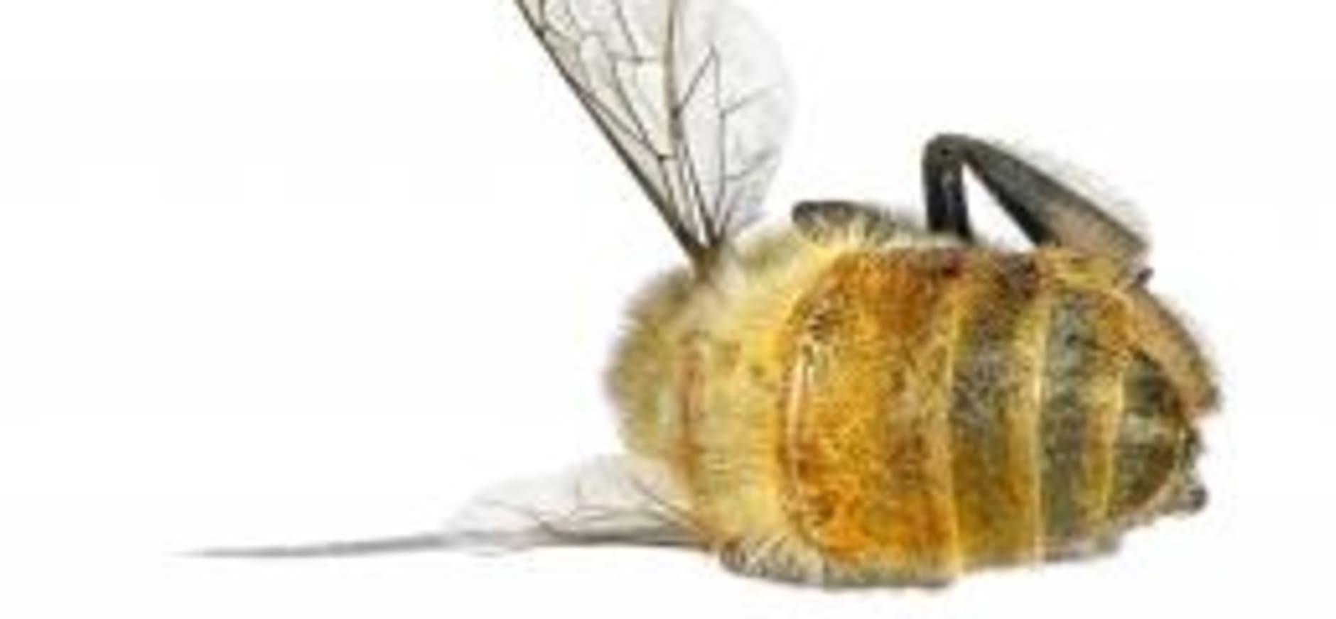 Nationale Bijenstrategie ondertekend
