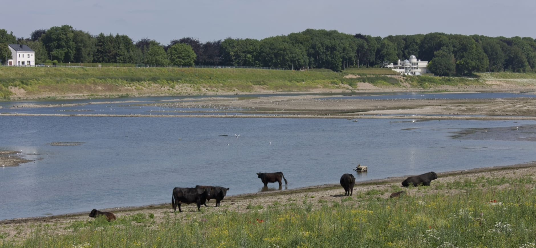 Limburg krijgt natuurgebied van Europese allure