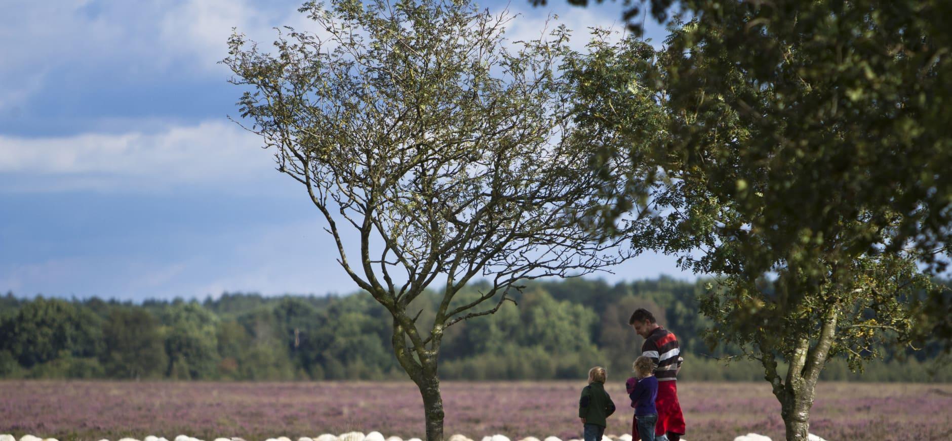 Vier het 25-jarig jubileum Nationaal Park Dwingelderveld