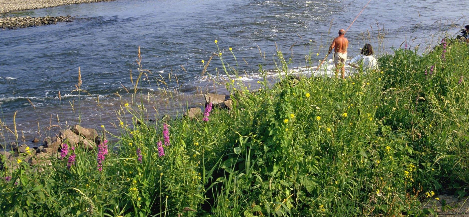 De Maas profiteert van hoge waterstanden