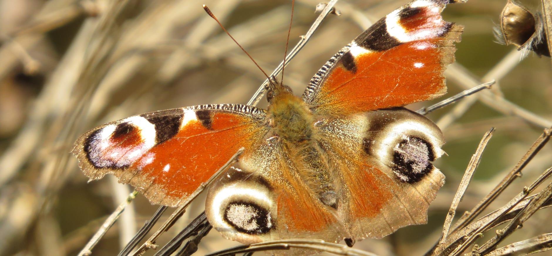 Nieuwe vlindertuin en kruidentuin op Brunssummerheide