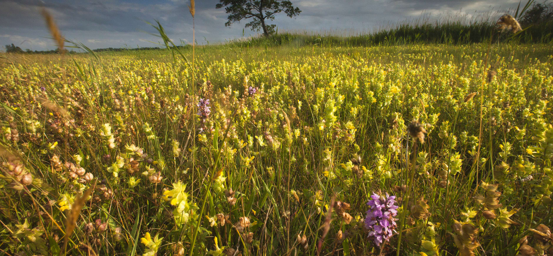 Stem op het mooiste natuurgebied van Nederland: stem Weerribben-Wieden!