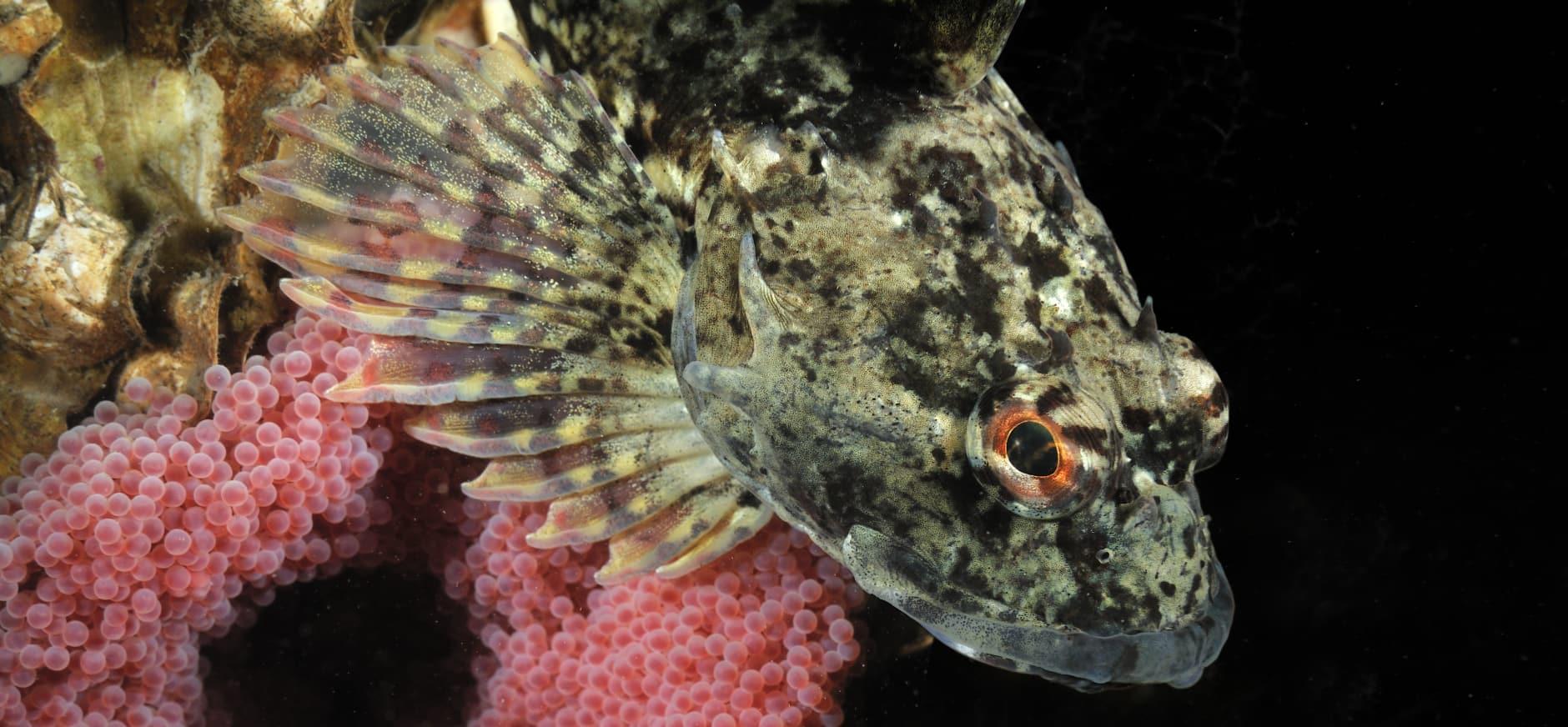 Akkoord voor betere bescherming zeenatuur