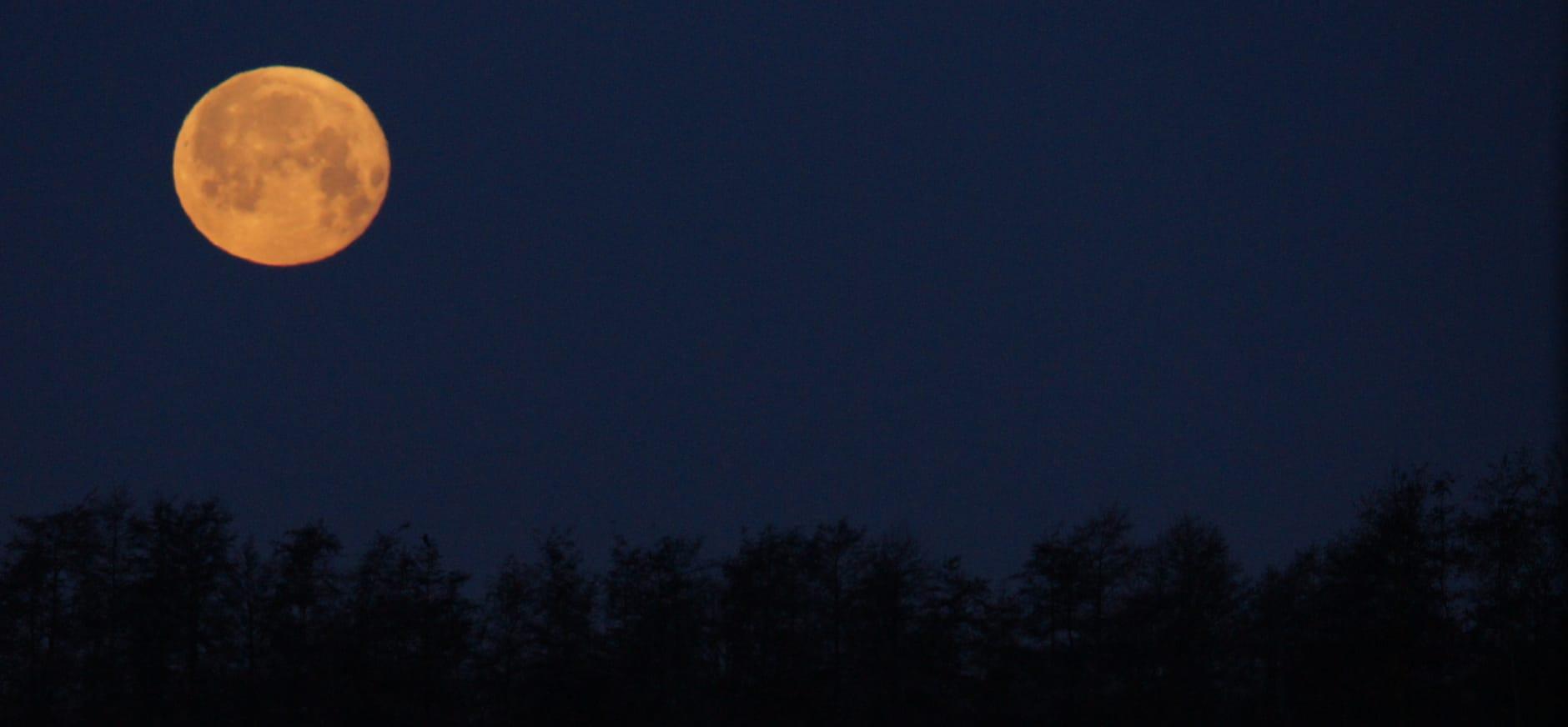 Beleef Midzomernacht op het Dwingelderveld
