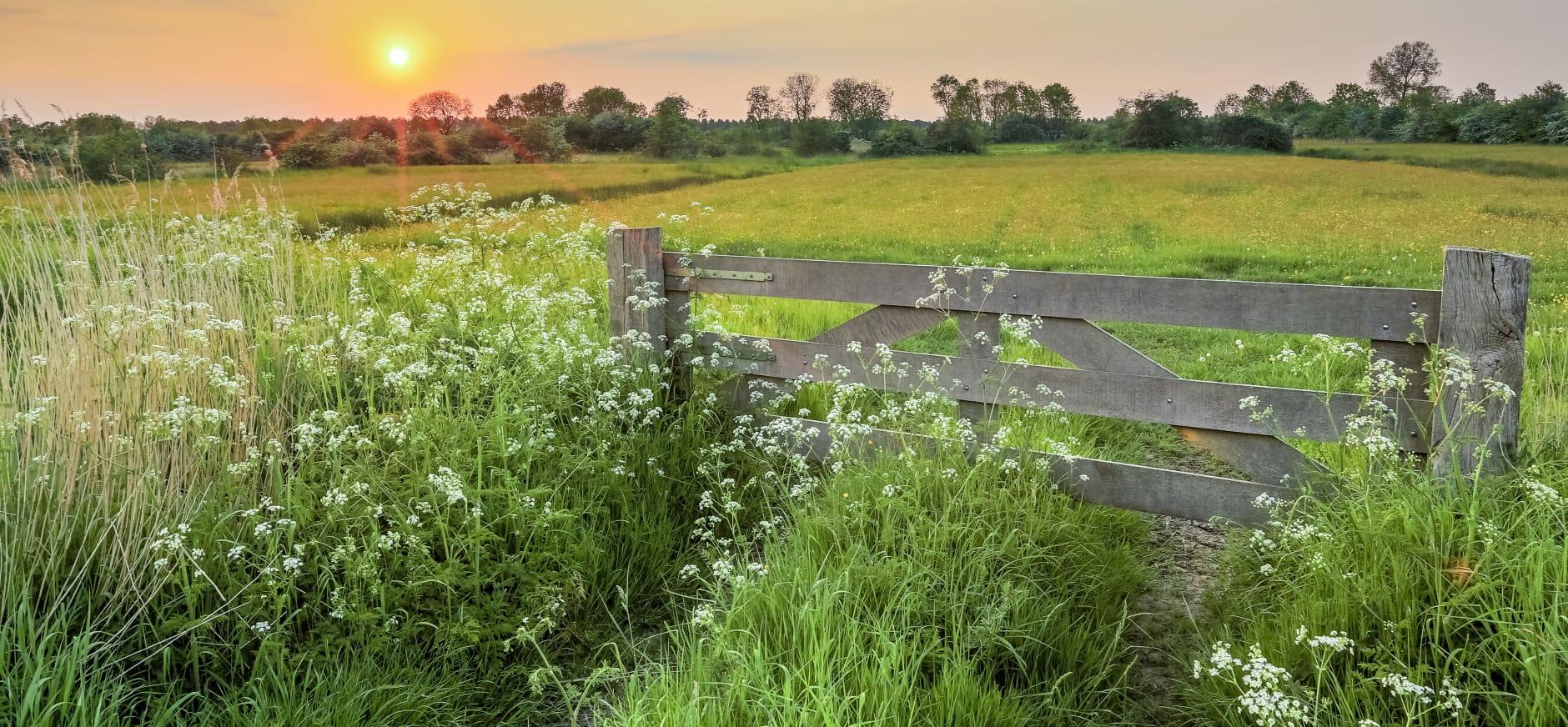Natuurmonumenten verzamelt 32.613 handtekeningen voor bescherming van Nederlandse landschap