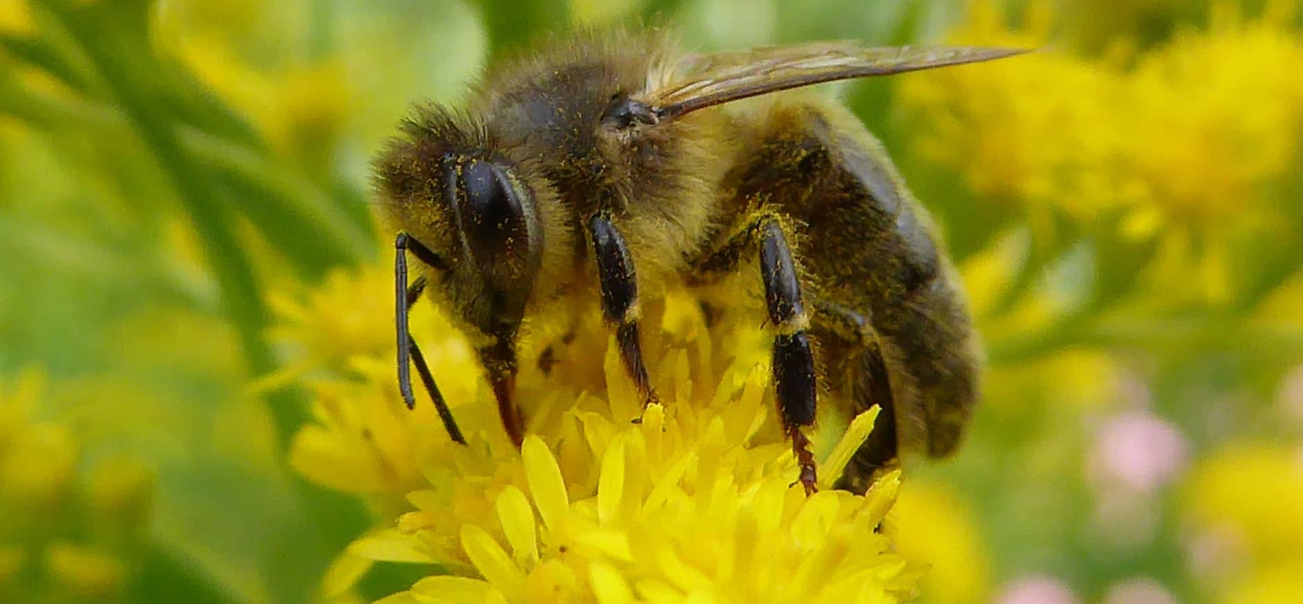 Verbod op pesticiden in ecologische aandachtsgebieden landbouw