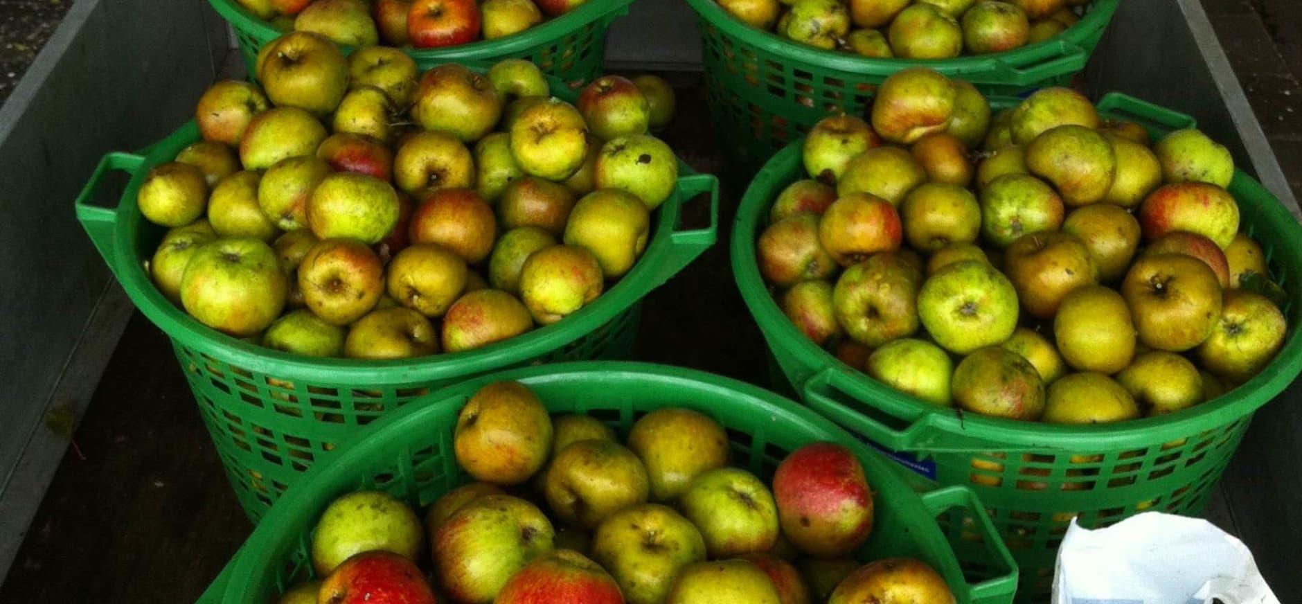 Fruitoogst Nijenburg naar Voedselbank Alkmaar