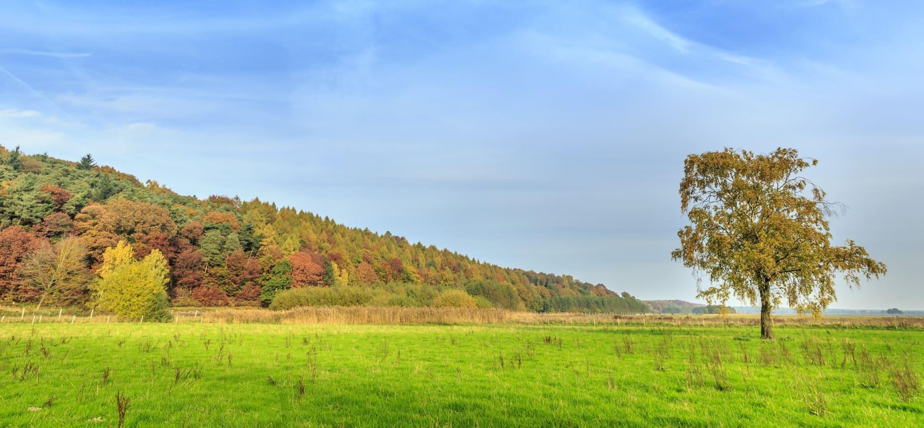 Het verzet tegen 200 meter hoge windturbines in Reichswald groeit!