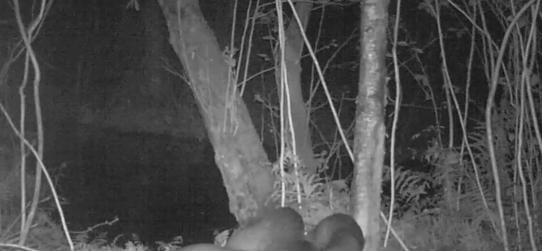 Maar liefst drie jonge otters geboren in de Nieuwkoopse Plassen!