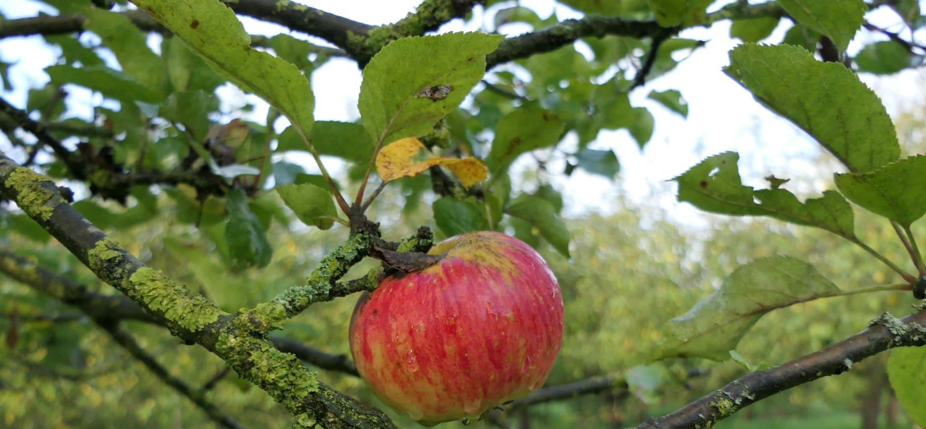 Je kunt de boom in op de Natuurwerkdag in Heerewaarden