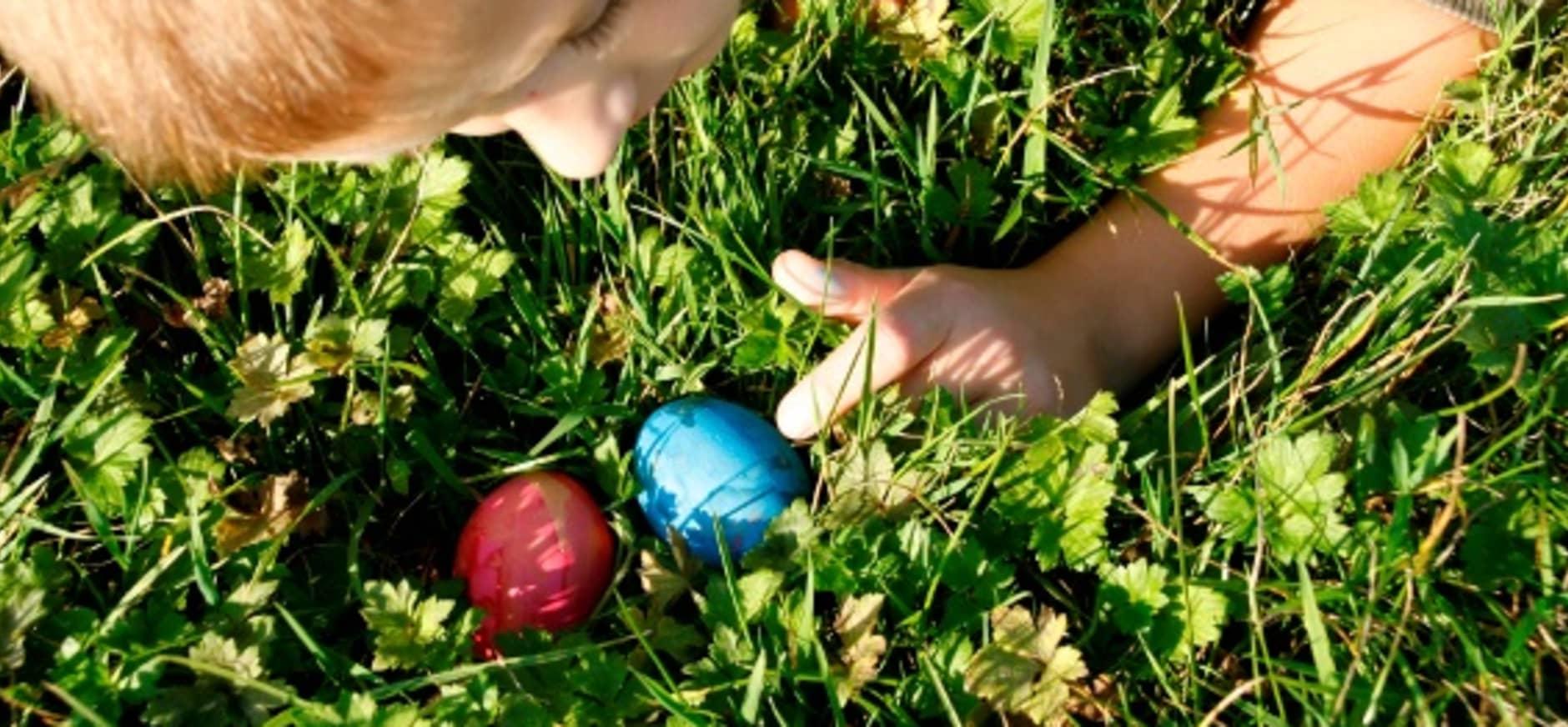Eieren zoeken op Paaseiland in de Nieuwkoopse Plassen