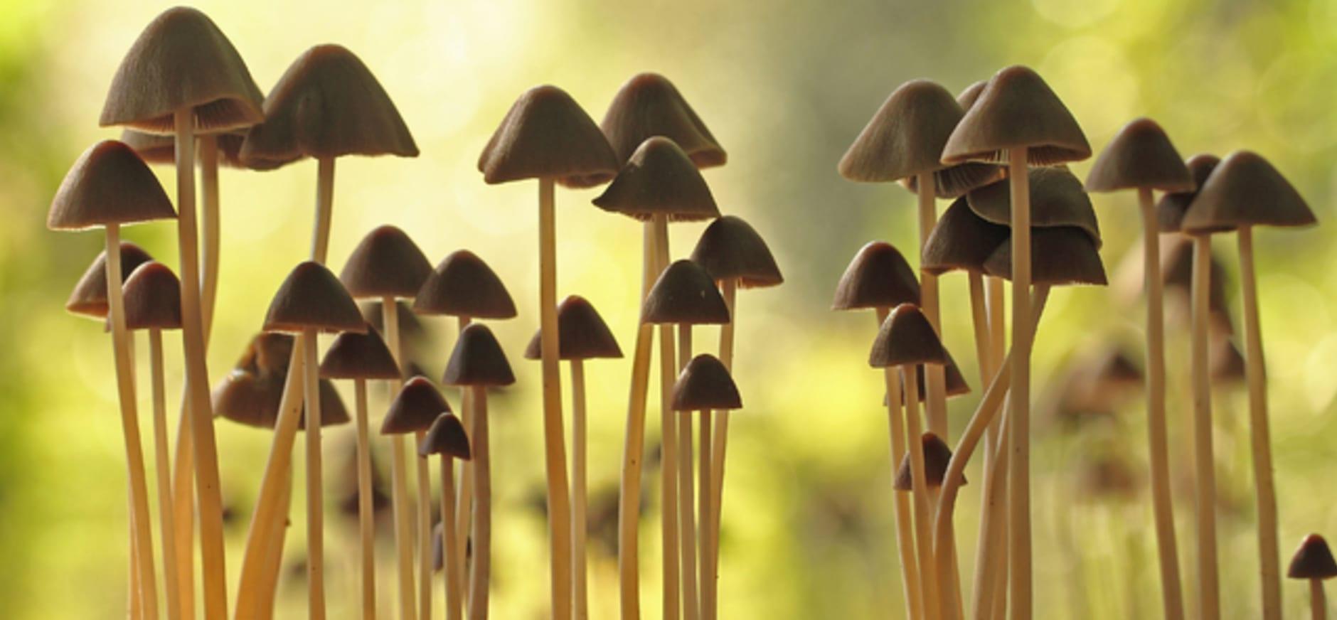 Van speldenknoppen tot dophoedjes: honderden paddenstoelen in het Voorsterbos