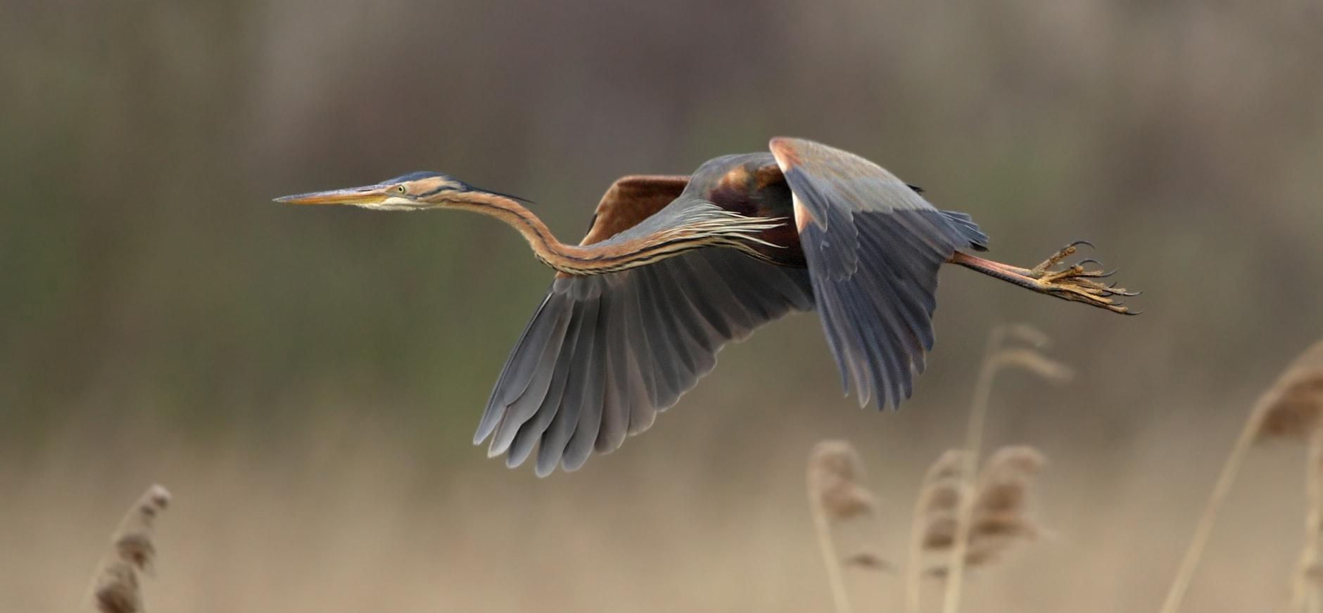 Nieuw boek over vogels in Weerribben-Wieden