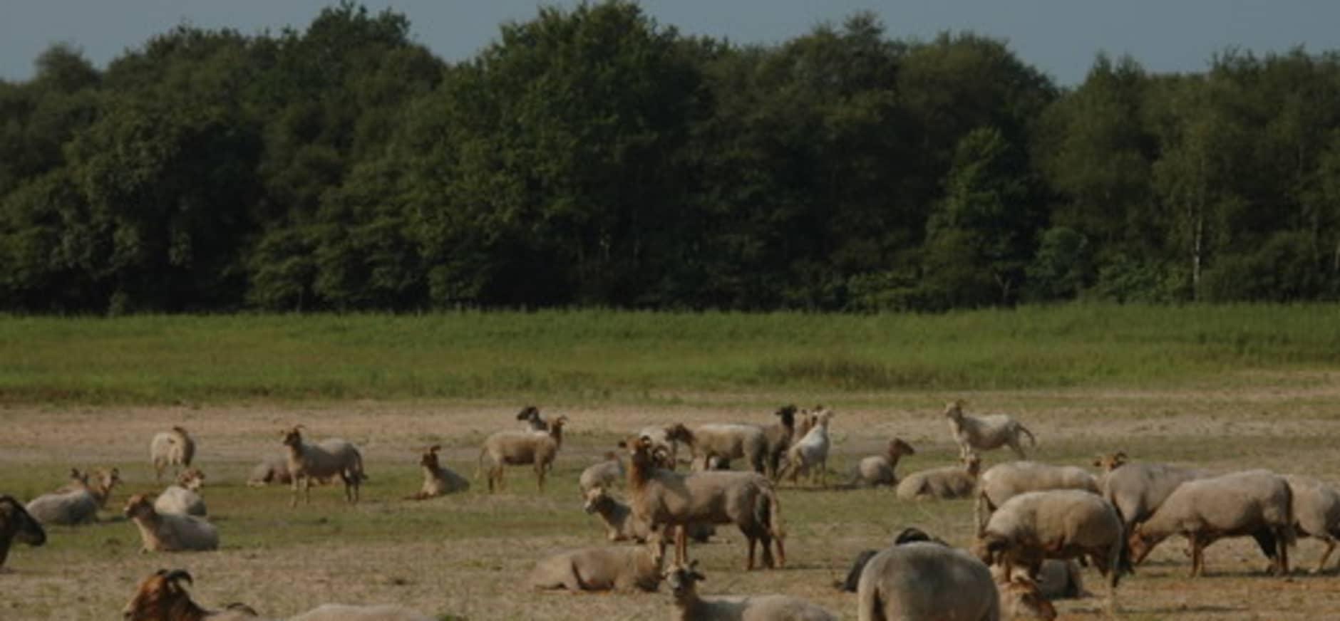 Nieuwe struinroute door Nationaal Park Dwingelderveld