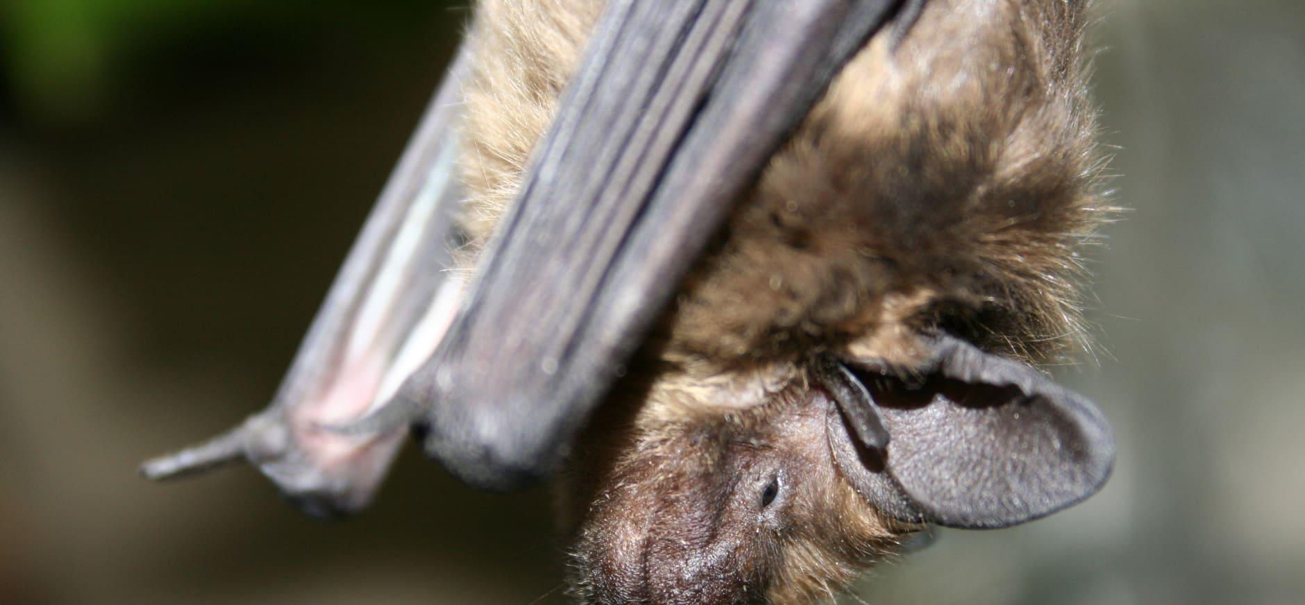 Meer vleermuizen geteld in Waterloopbos