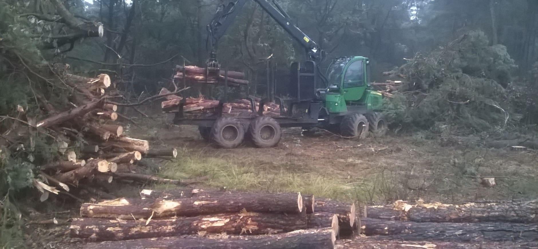 Bomen kappen voor natuurlijke overgang