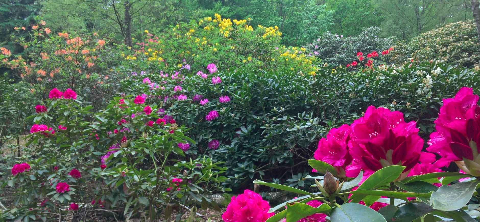 Geniet van de kleurrijke lente op de Sprengenberg