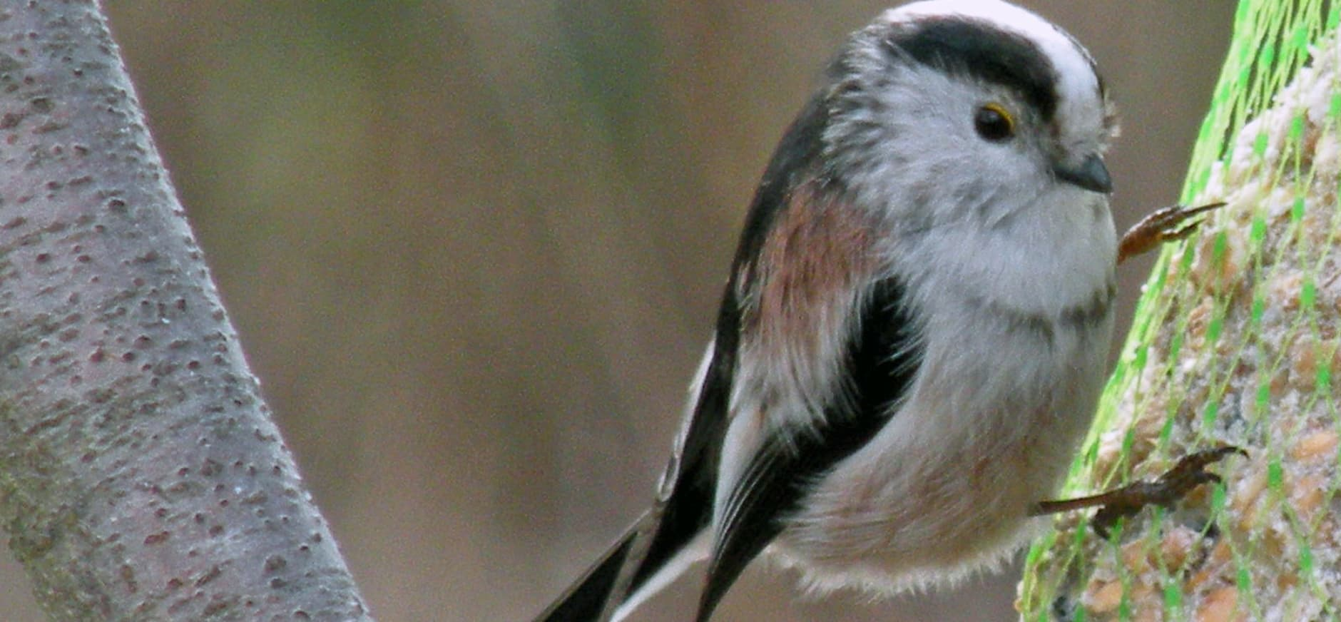 Vogels verwennen tijdens de Wilde Buiten Dag op Tiengemeten