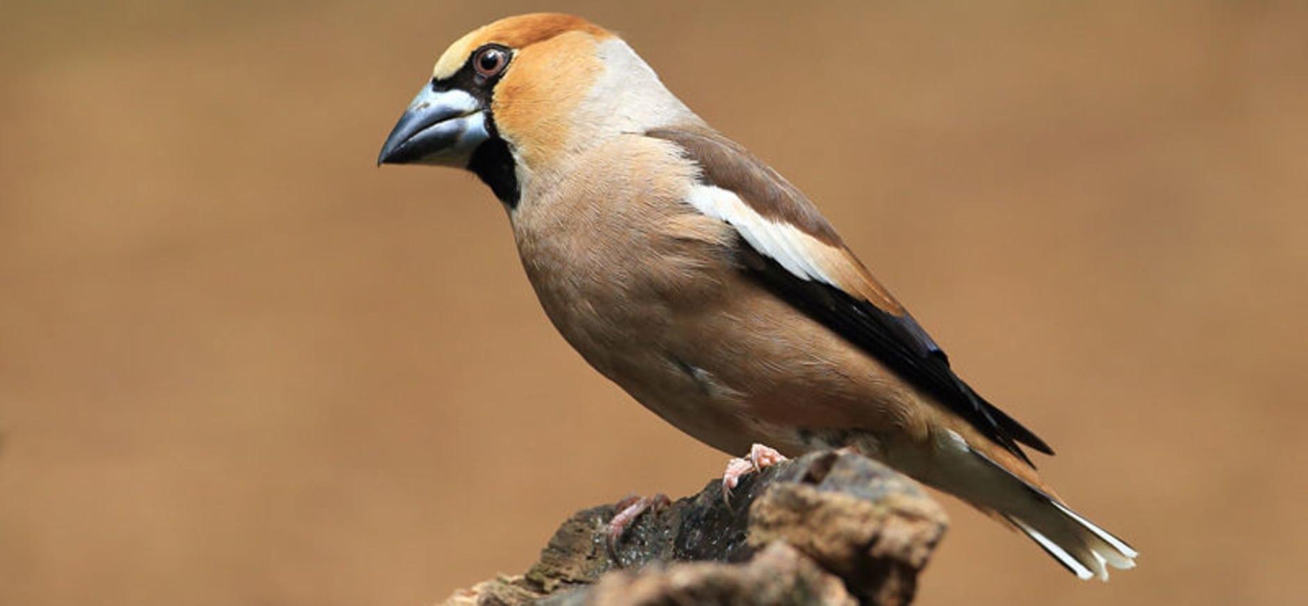 Rapport broedvogelonderzoek voor omwonenden