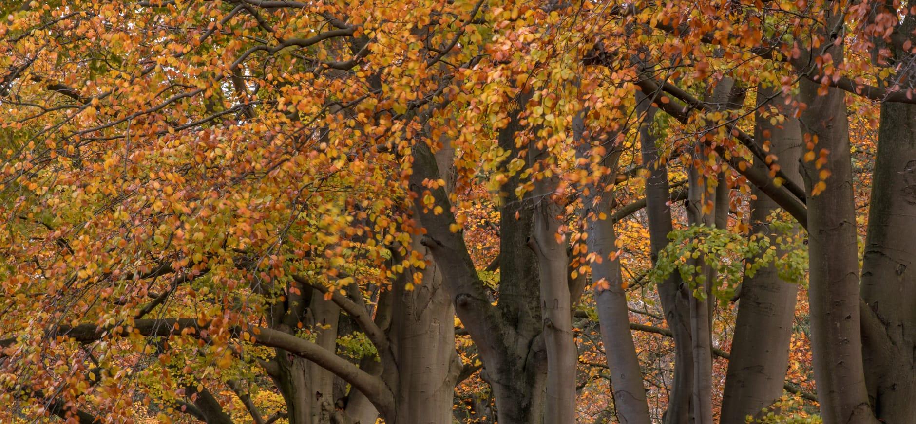 Zagen op Landgoed Nijenburg: pracht en praal en hard werken