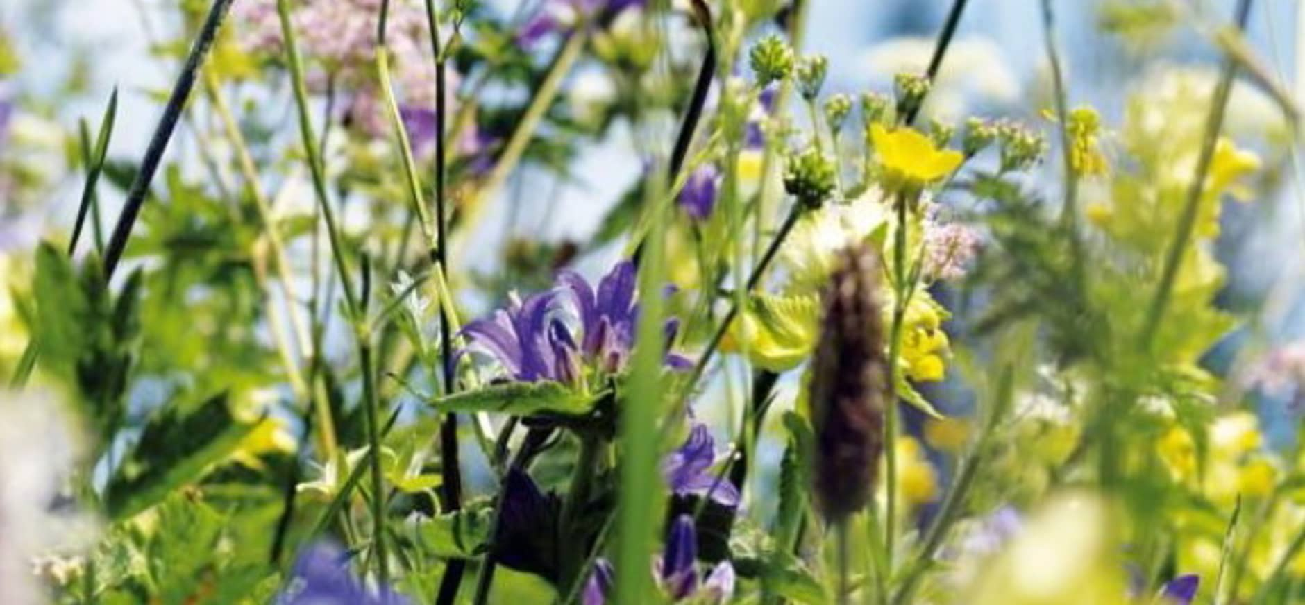 Weleda en Natuurmonumenten creëren samen 100.000 m² bloemrijke natuur