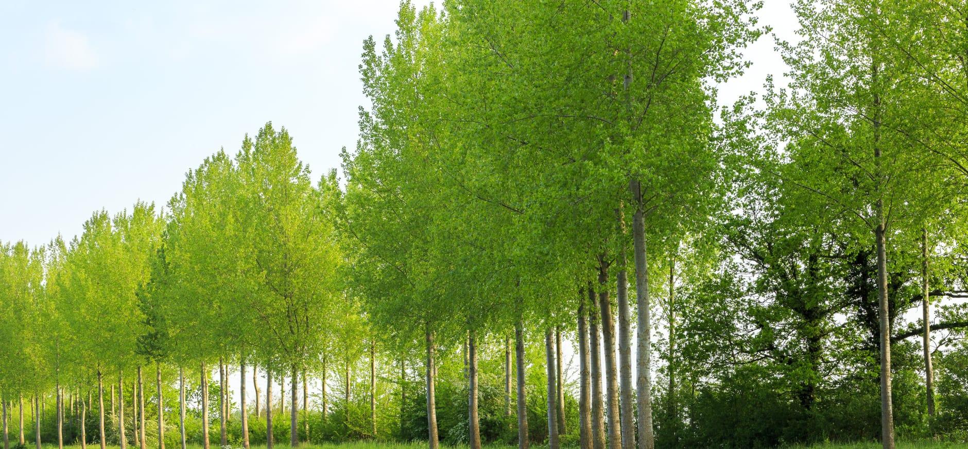Bomen aan Haagdijk 's-Gravenpolder blijven staan