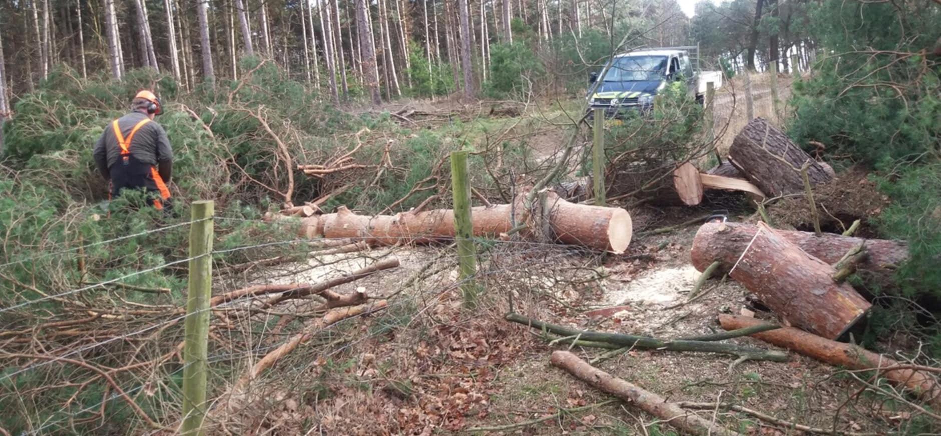 Kansen voor natuur door storm