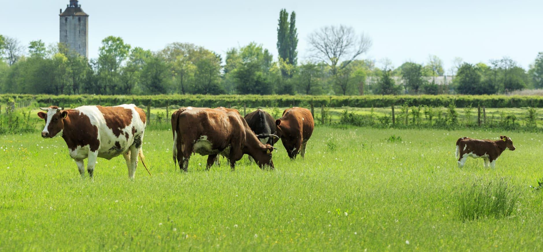 Utrechtse natuur- en landbouworganisaties presenteren Actieplan Duurzame Landbouw met Natuur