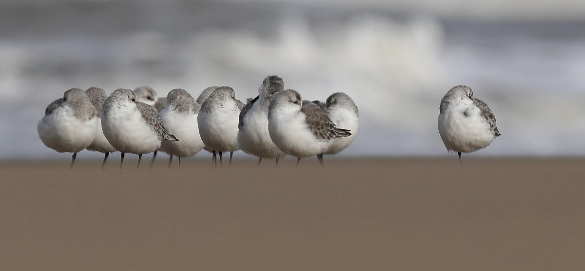 Deskundigen kritisch over zoutwinning onder Waddenzee