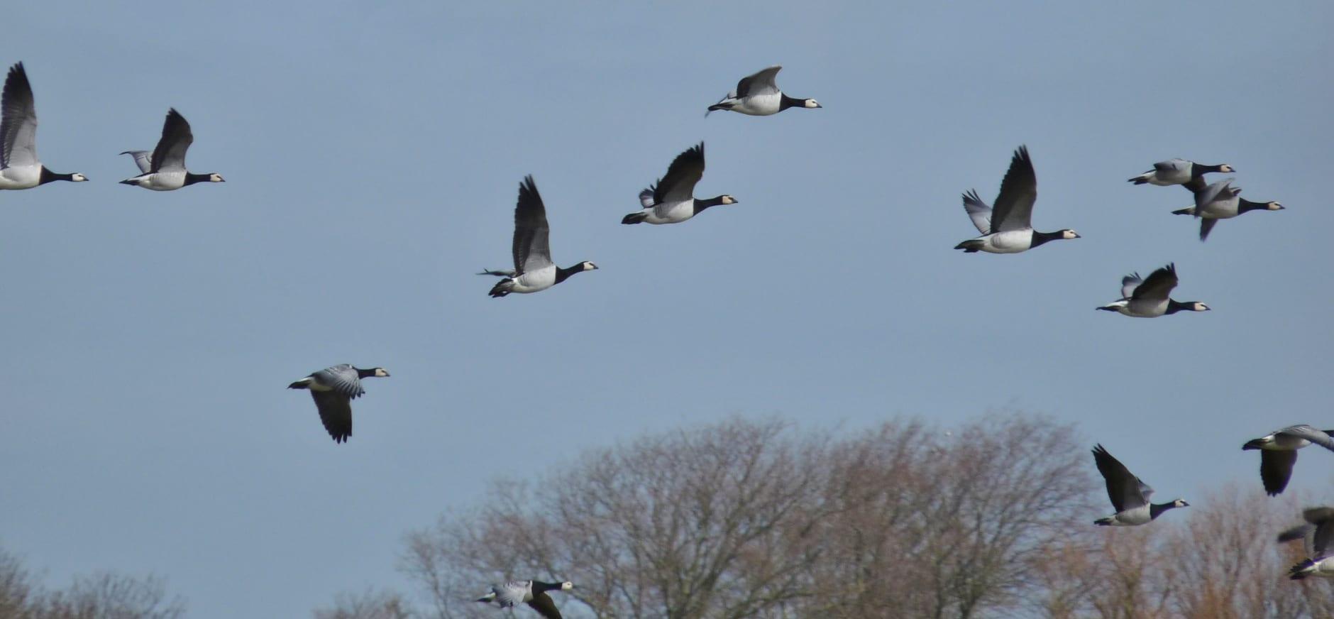 Natuurverhaal van de week: vogeltrek