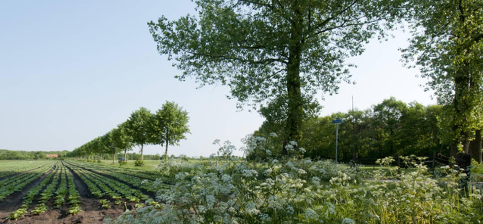 Oproep aan Europarlementariërs: kies voor natuur, niet voor pesticiden!