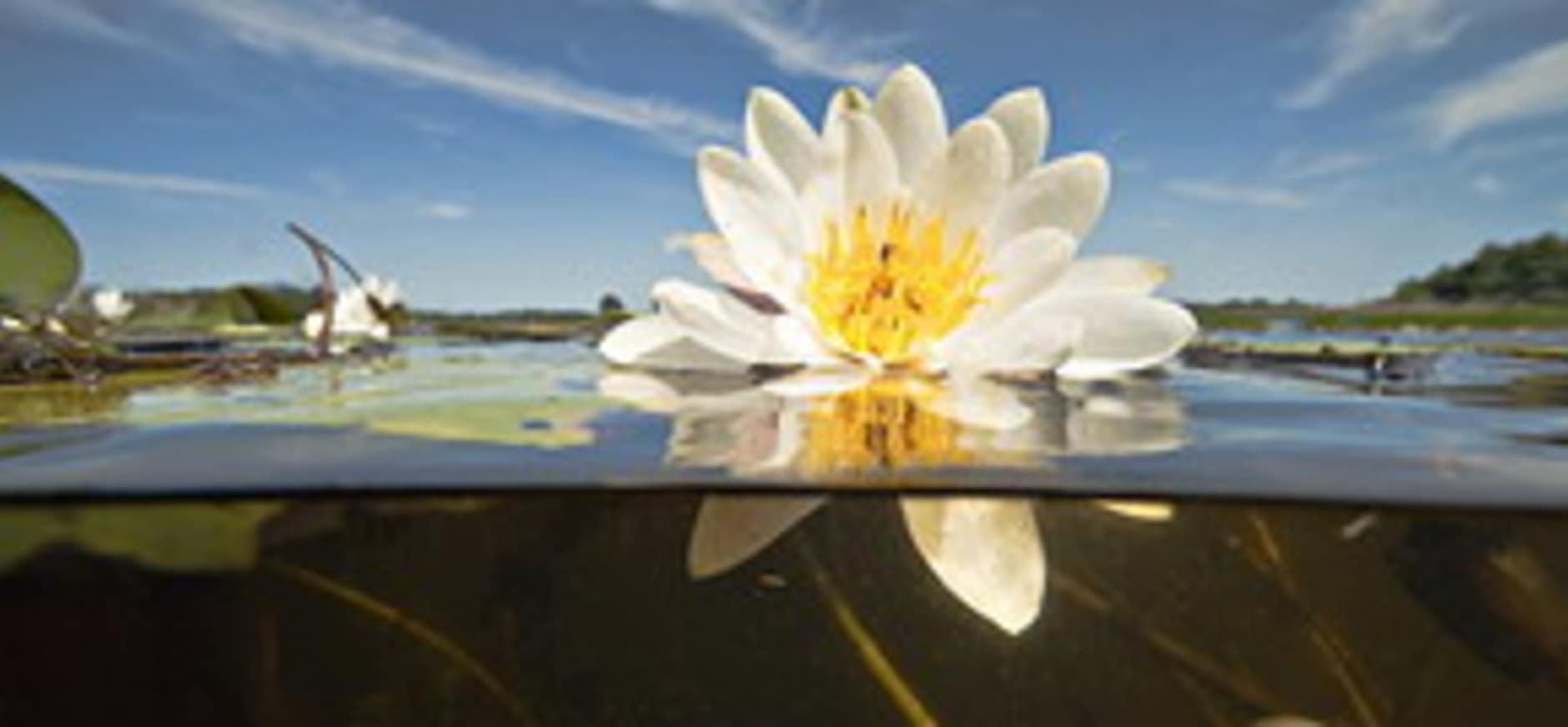 Natuur Innovatieprijs 2015: natuur onder water beleefbaar maken