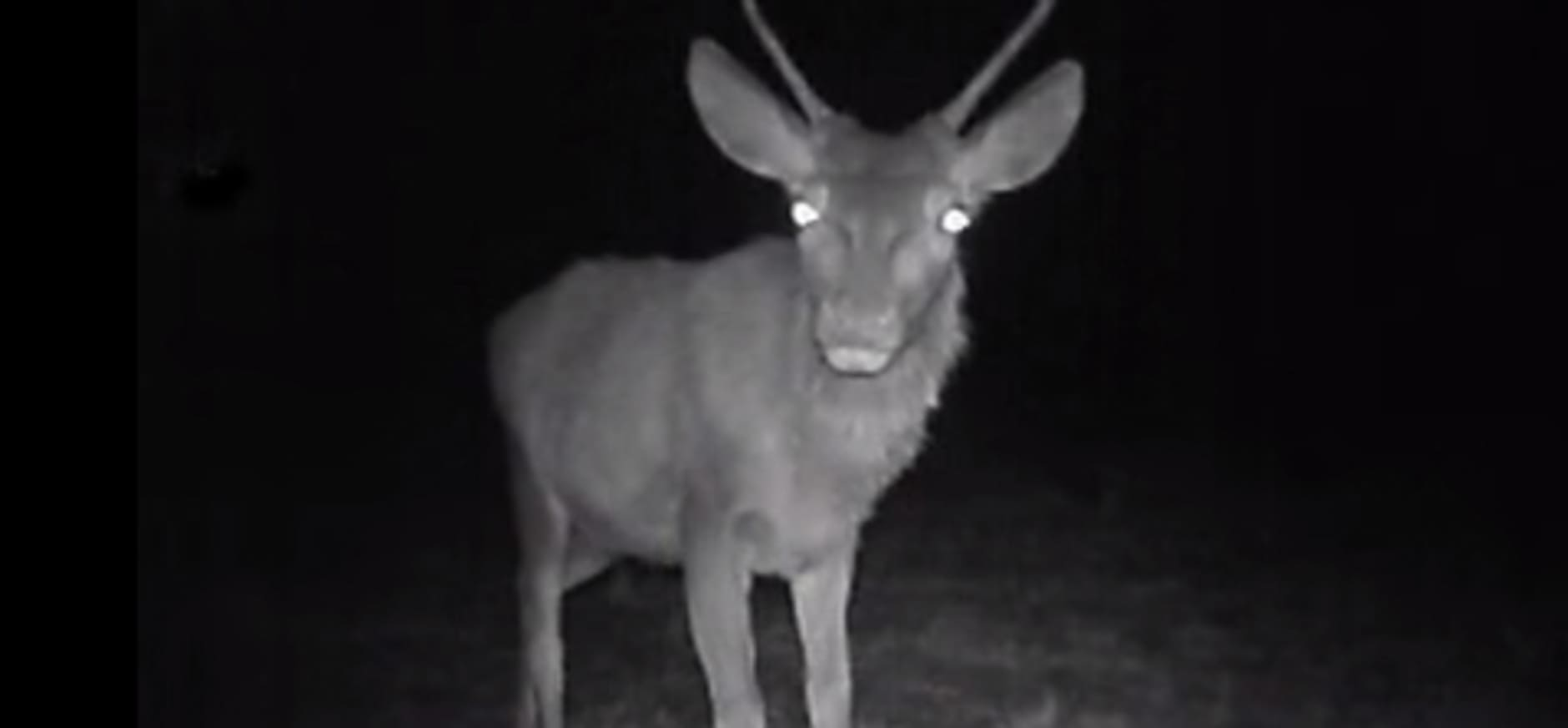 Natuurfragmentje: dieren in de nacht