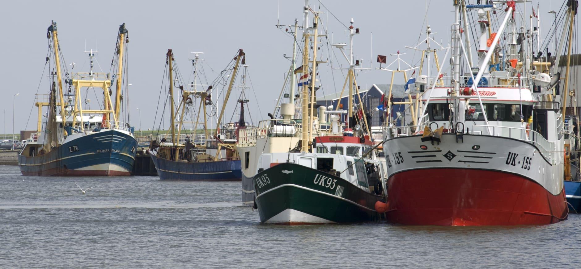 Garnalenvisserij wordt duurzamer met nieuwe natuurvergunning