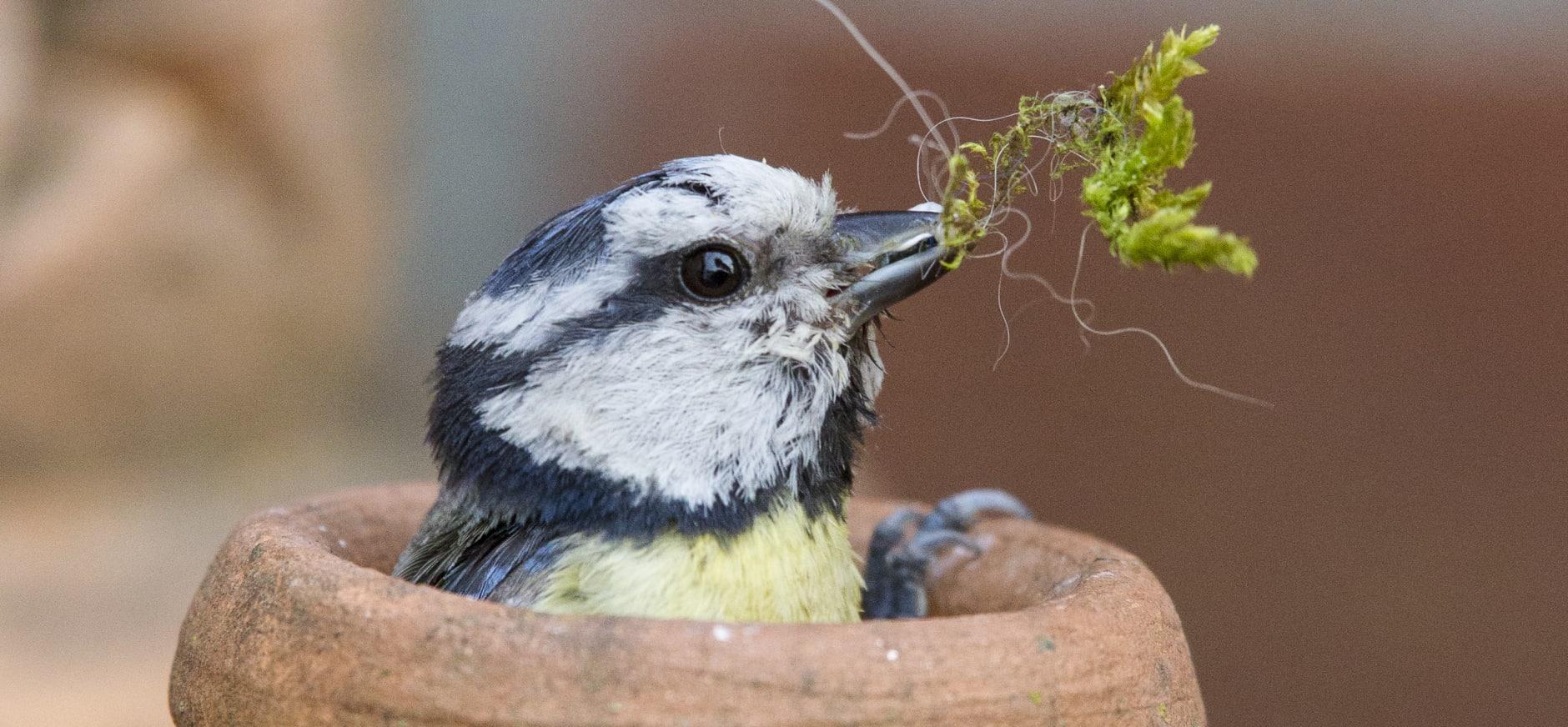 Nu goed te zien: vogels in je eigen (stads)tuin