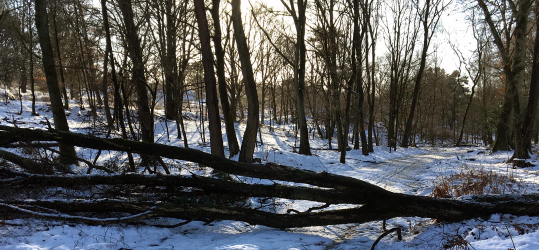 Winterse omstandigheden op Veluwezoom: plan je wandeling