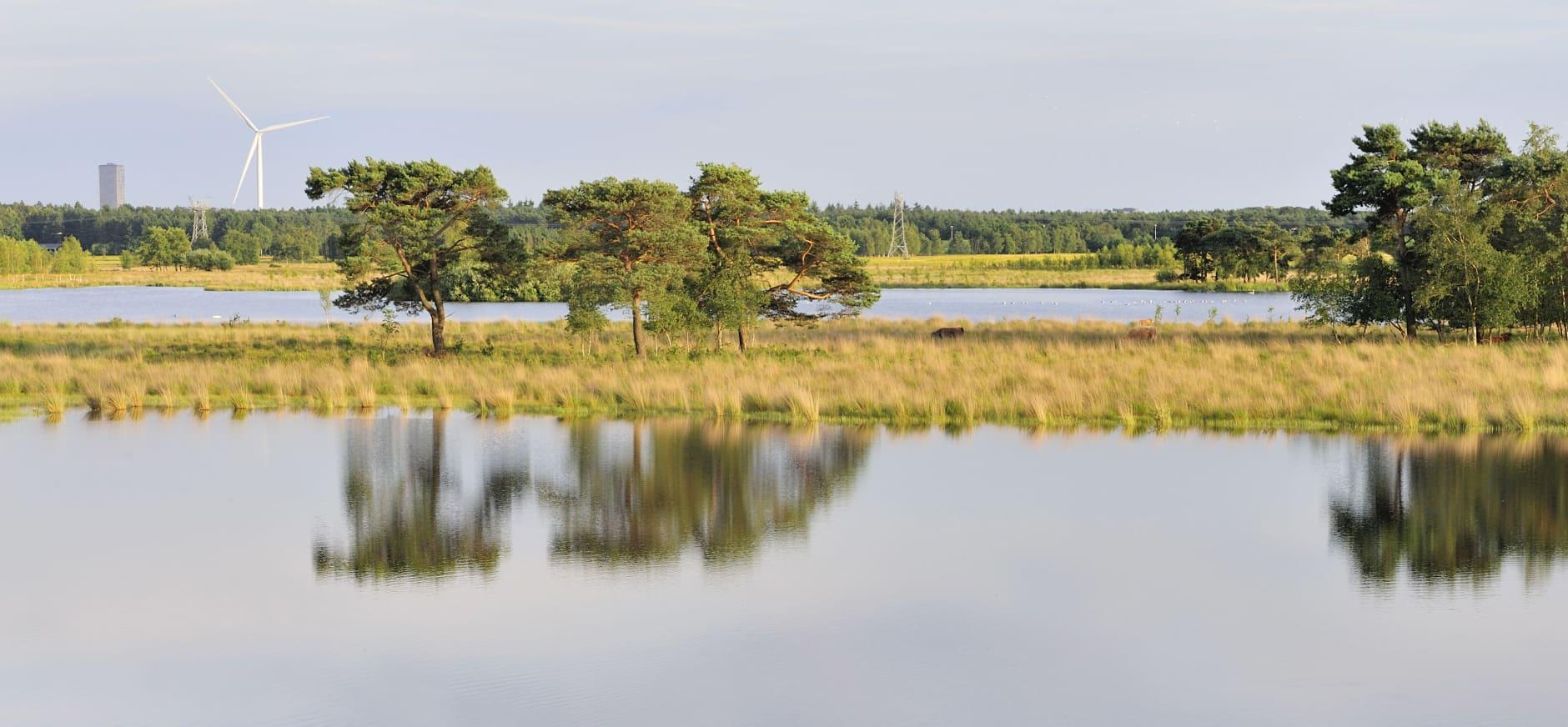 Waterrijke vogelparadijs Huis ter Heide
