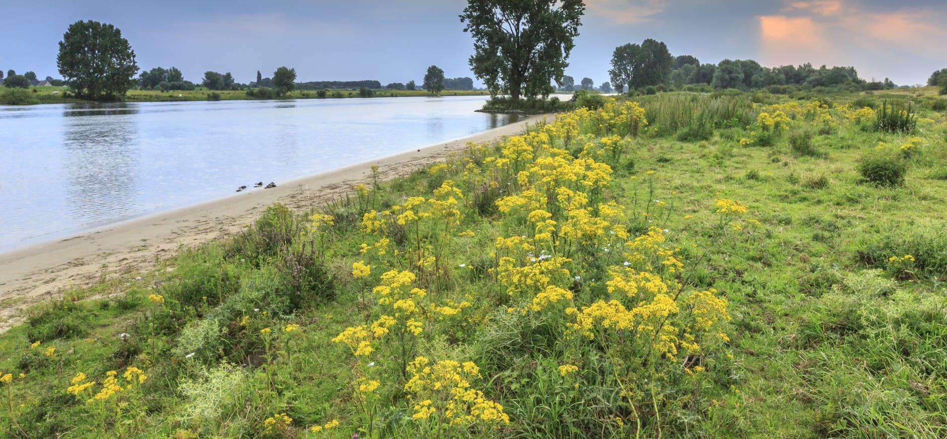 Maasuiterwaarden, riviernatuur verspreid over 70 km langs de Maas.
