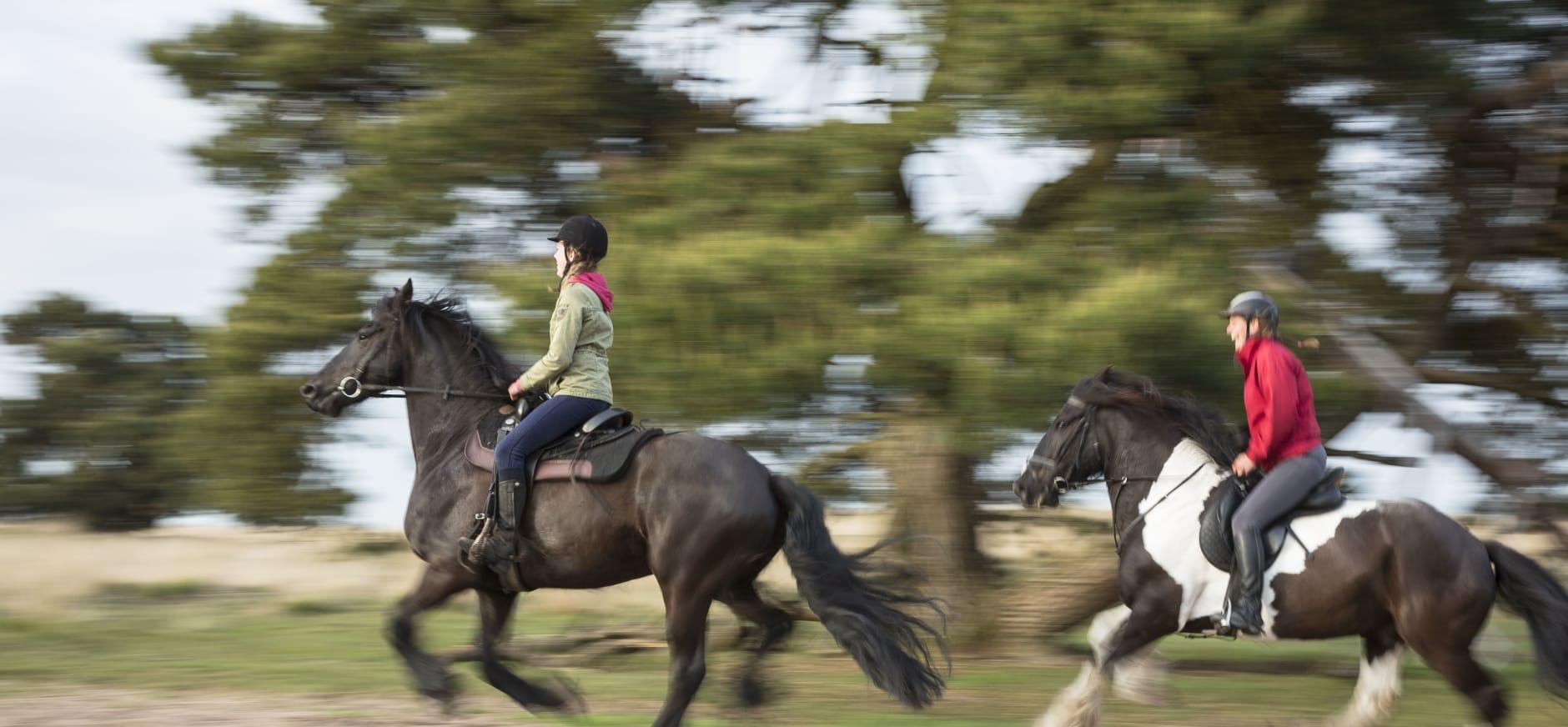 Paardrijden in Veluwezoom