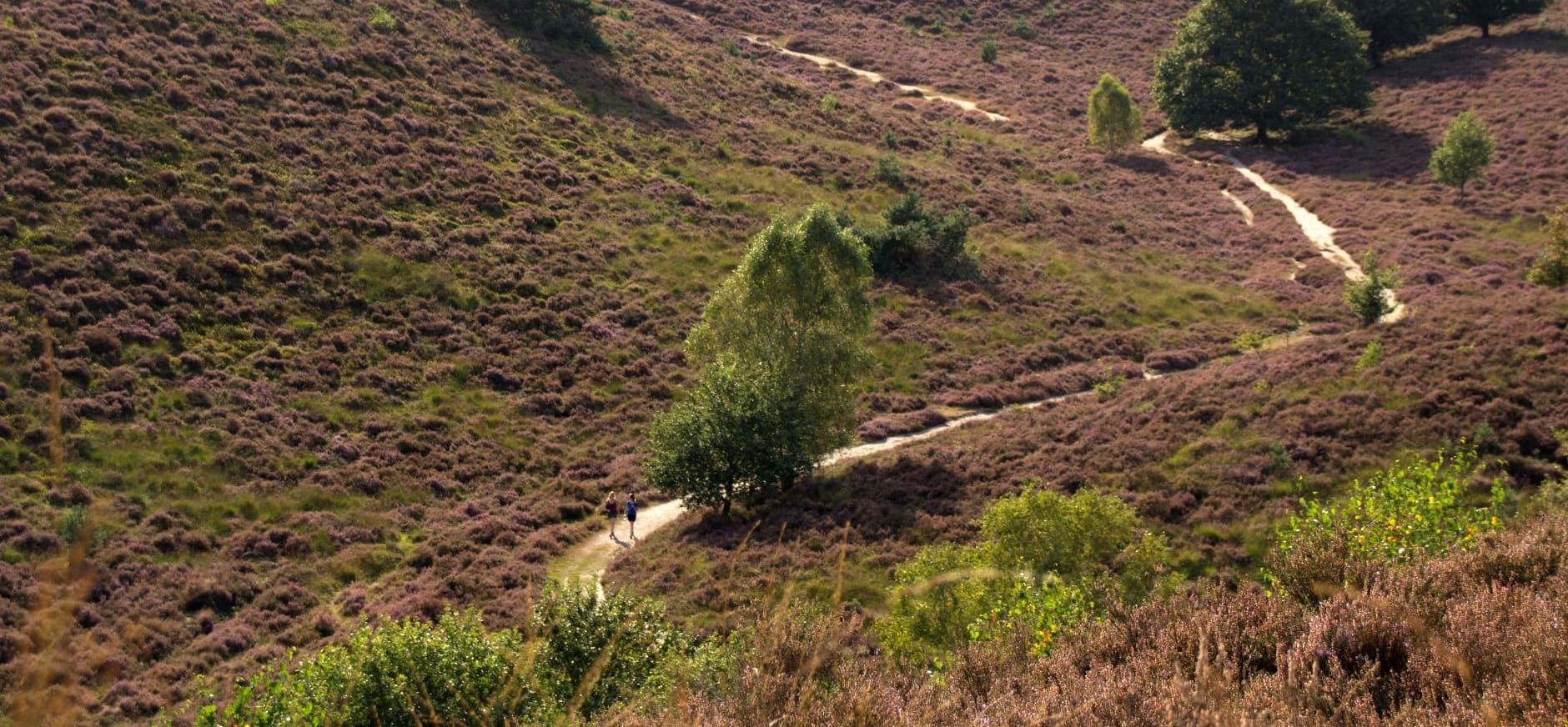 Rondom het Herikhuizerveld zie je heideheuvels tot zover het oog reikt