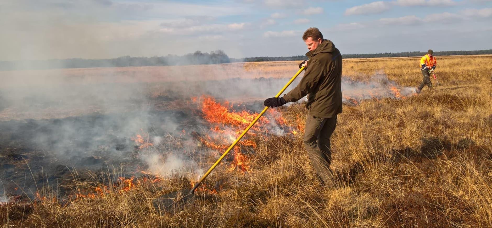 gecontroleerd heidebranden Dwingelderveld