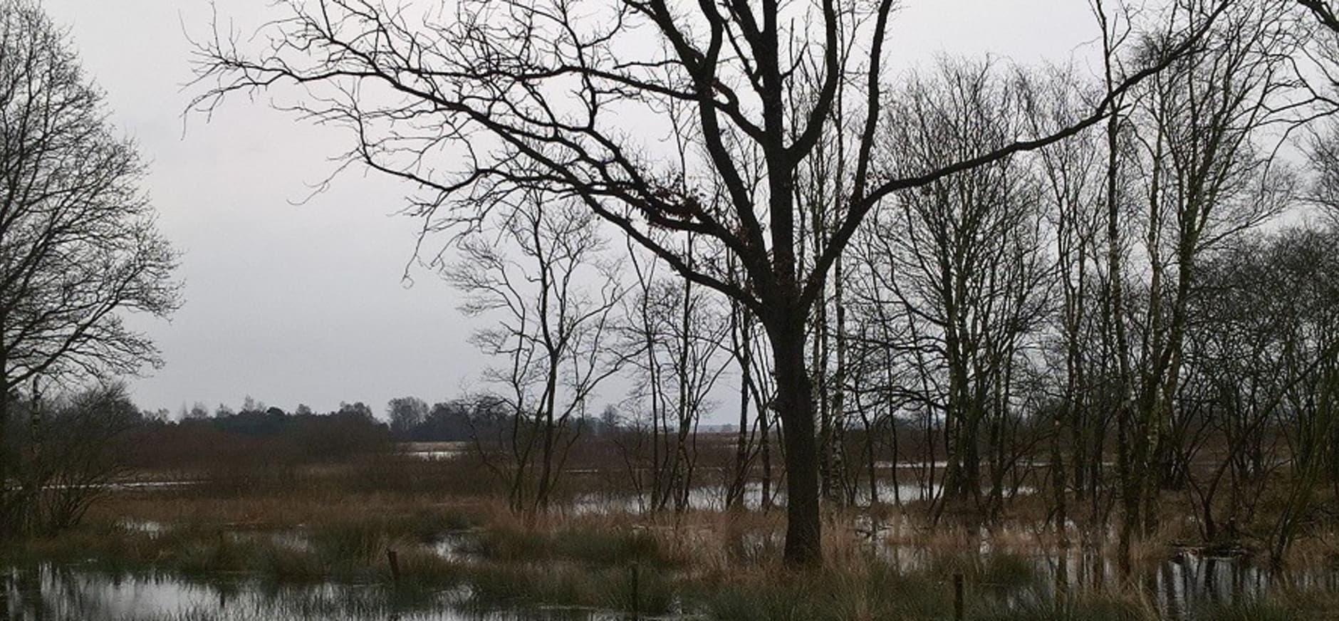 Waterberging in het Dwingelderveld