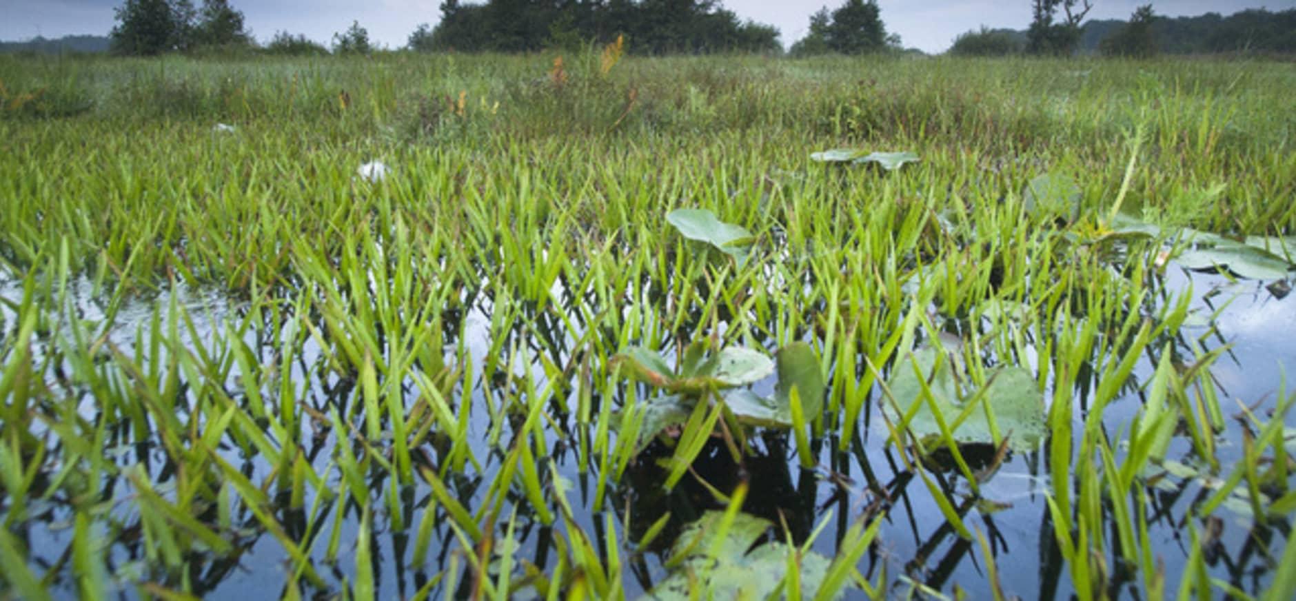 Natura 2000 ontwerp-beheerplan Wieden Weerribben klaar