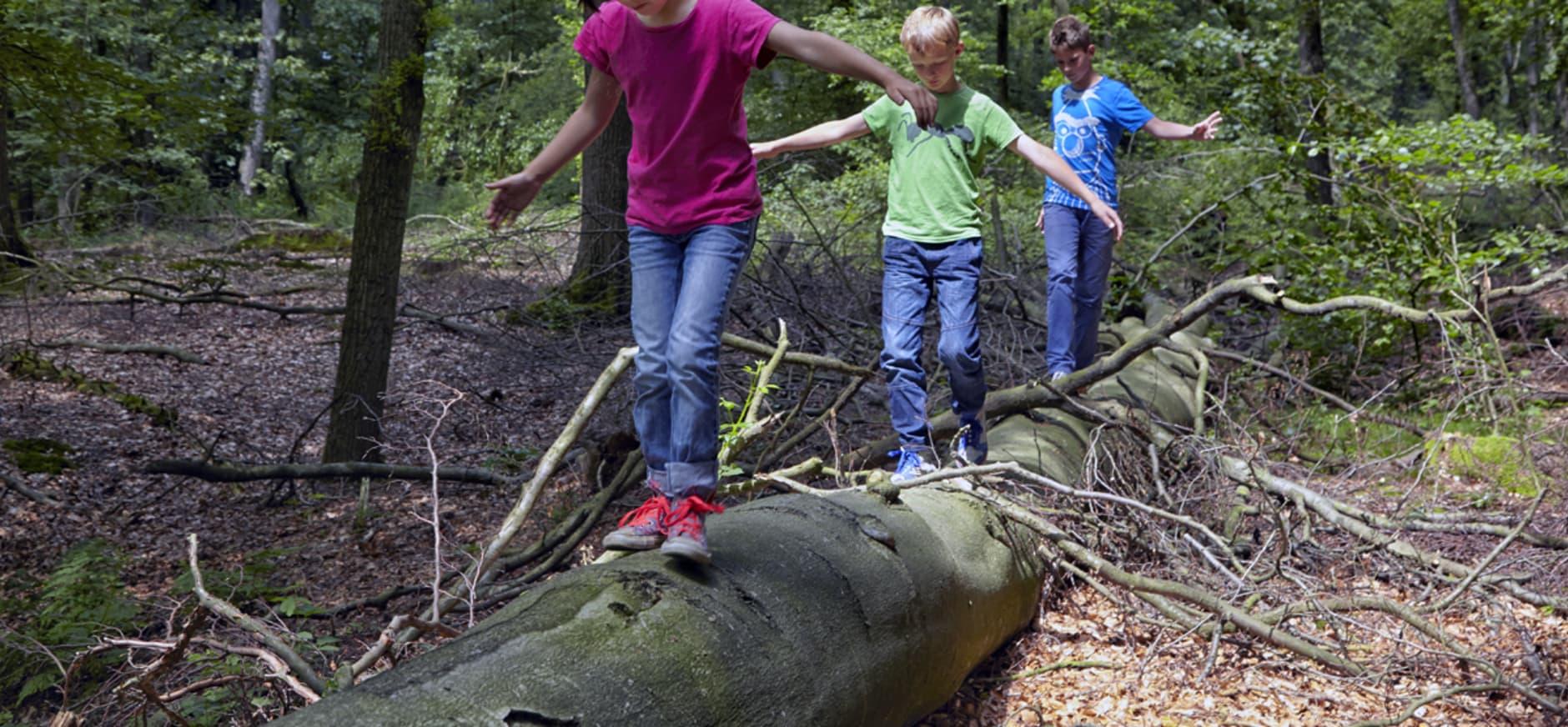 Natuur en geschiedenis gaan hand in hand op Veluwezoom