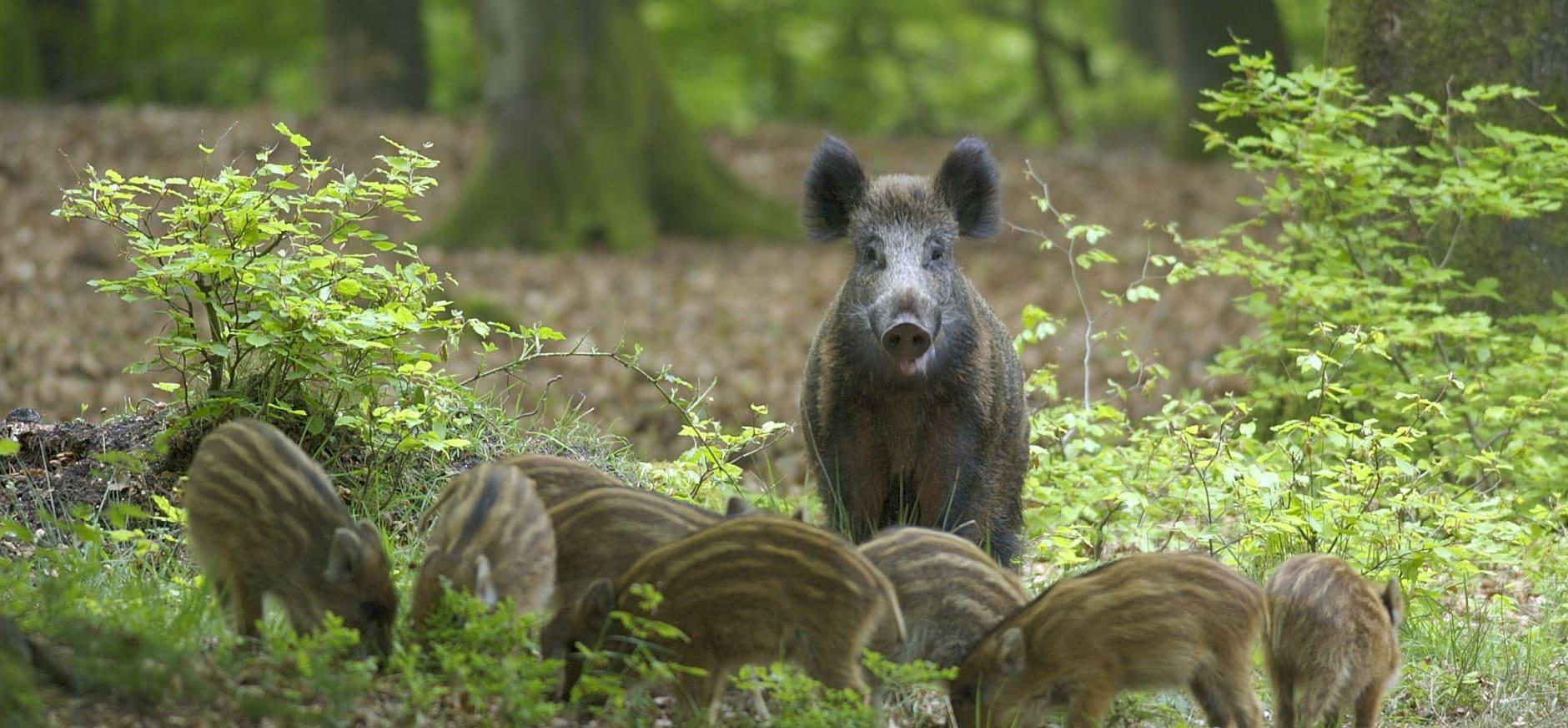 Welk cijfer krijgt het Leuvenumse bos op de Veluwe? Geef je mening!