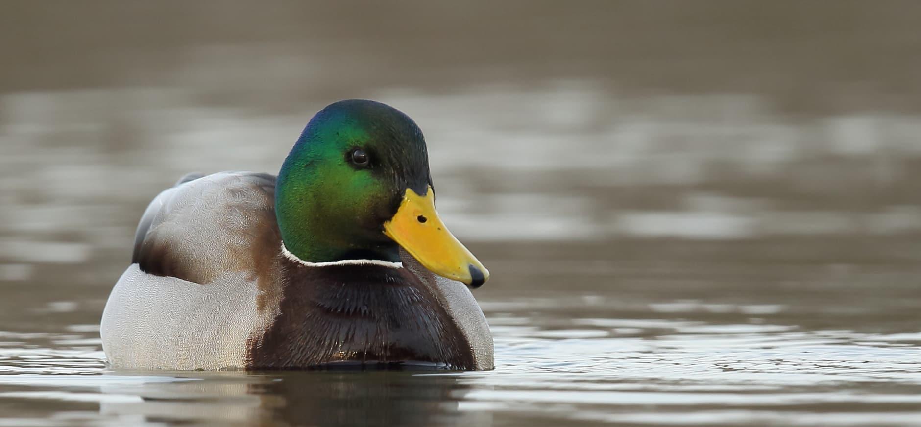 Vogelgriep: raak dode vogels niet aan