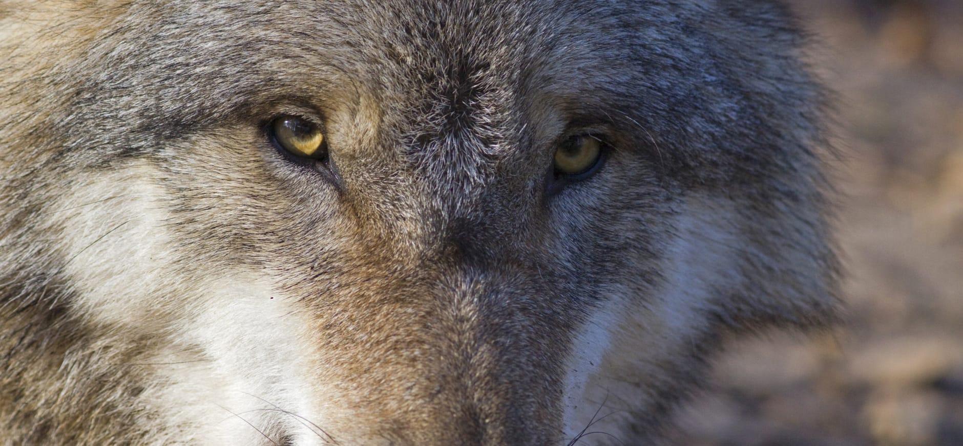 Blog: Als het beestje maar een naam heeft