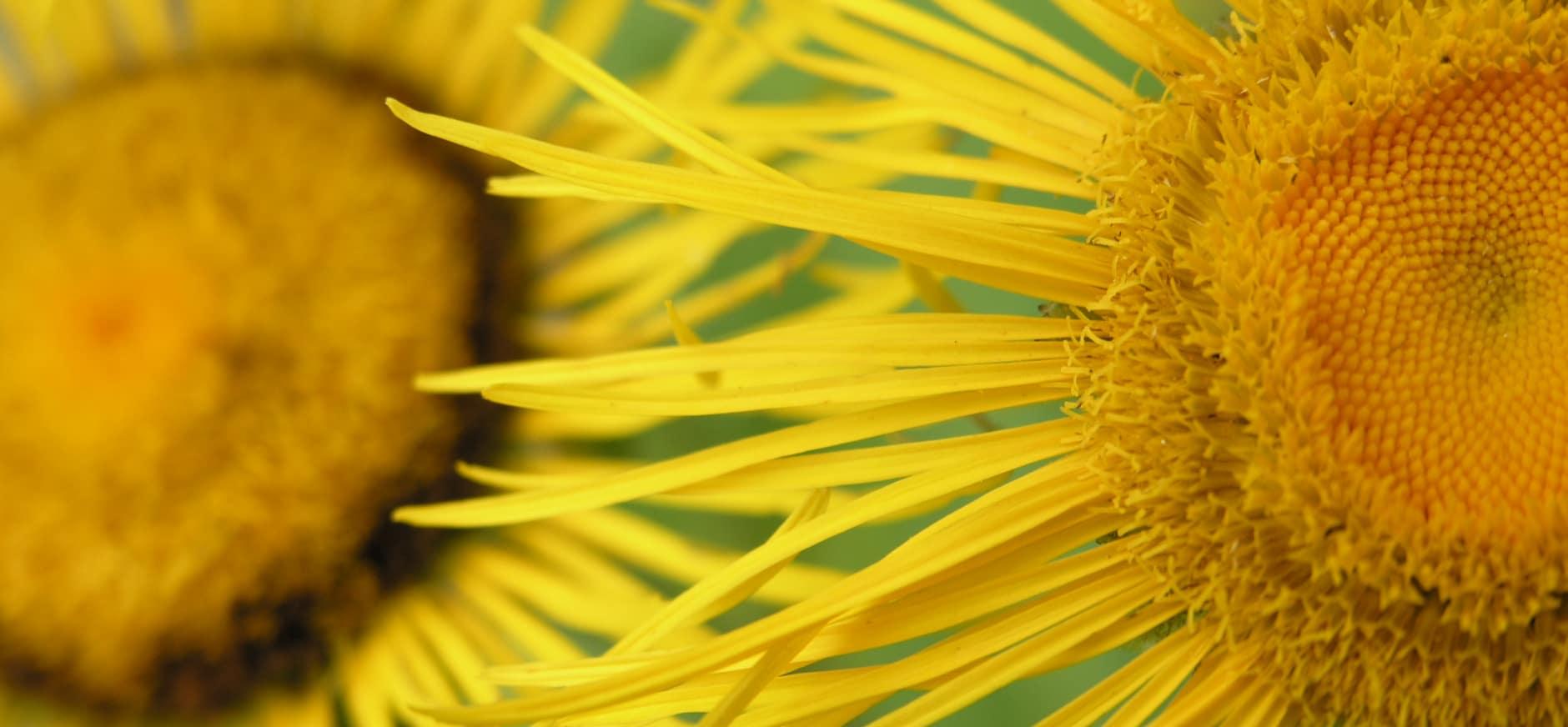 Nieuwe plantensoort ontdekt op Schiermonnikoog